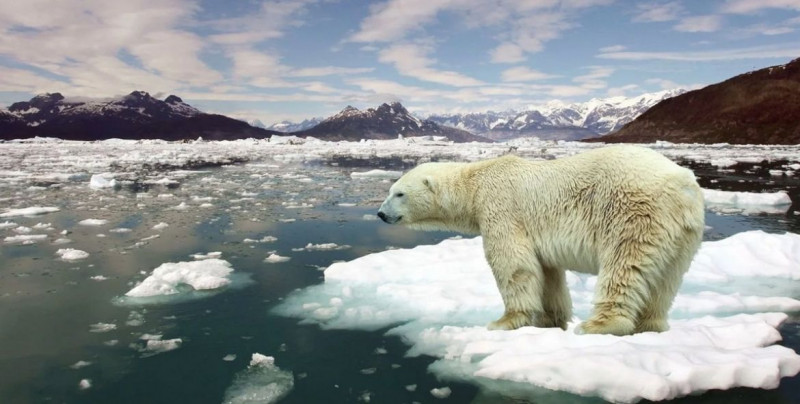 """El Ártico """"se ha calentado tanto que hay una transición hacia un nuevo clima"""": Nature Climate Change"""