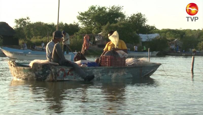 Inician capturas de camarón en El Huizache- Caimanero, ven riesgo