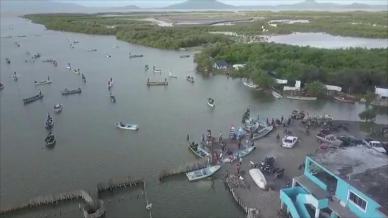 Esperan que se mantengan buenas capturas de camarón en esteros del sur de Sinaloa