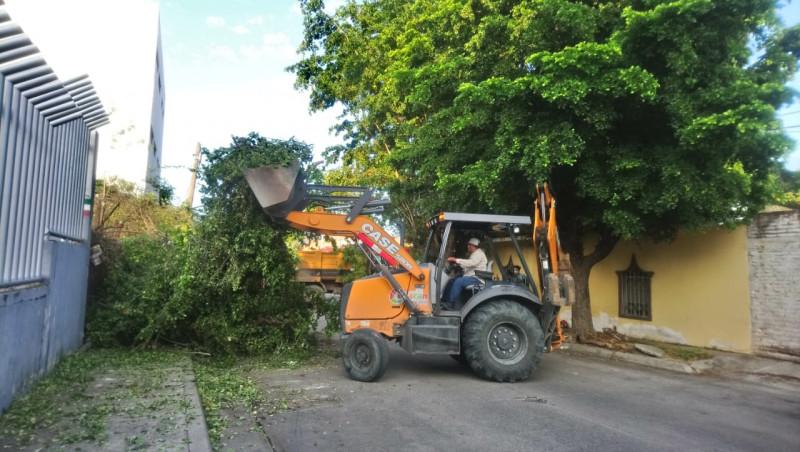 Retiran árbol que se cayó el pasado 15 de septiembre