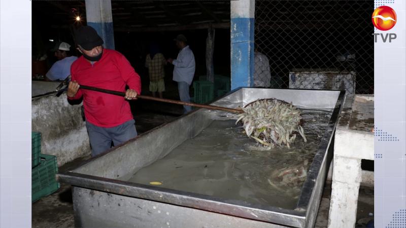 Llegan a más de 673 toneladas de camarón en esteros sinaloenses