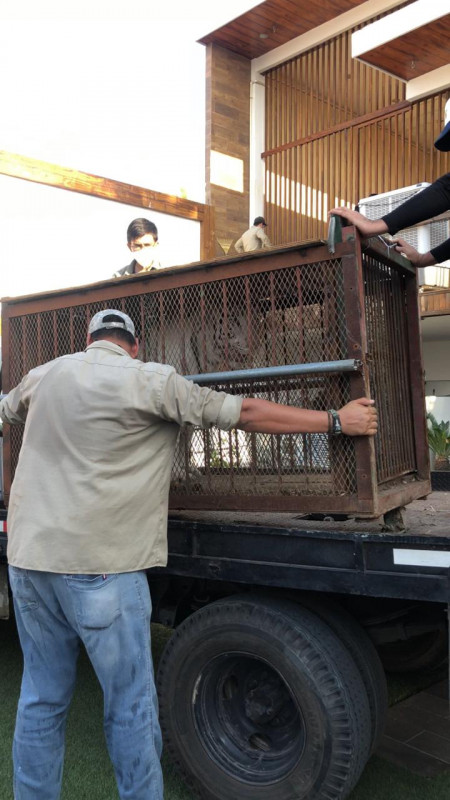 Apoya el zoológico de Culiacán en decomisos  a PROFEPA