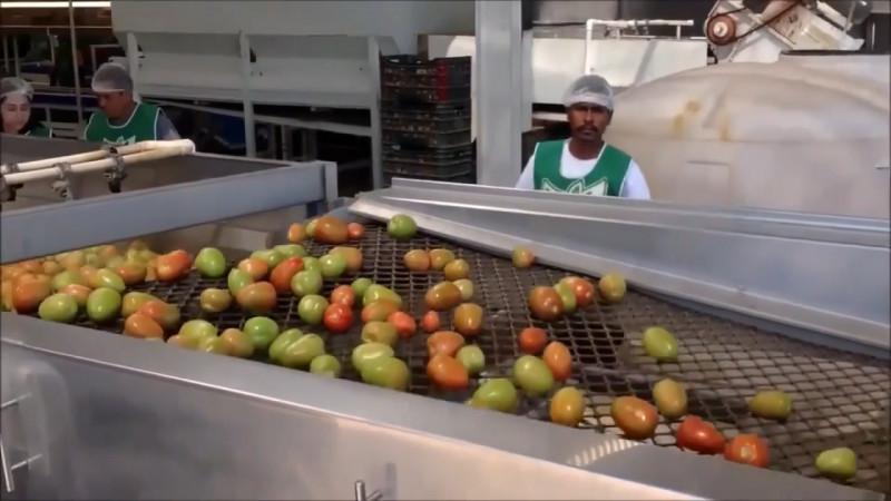 Tras pandemia de Covid 19, preven buen ciclo de producción de tomate