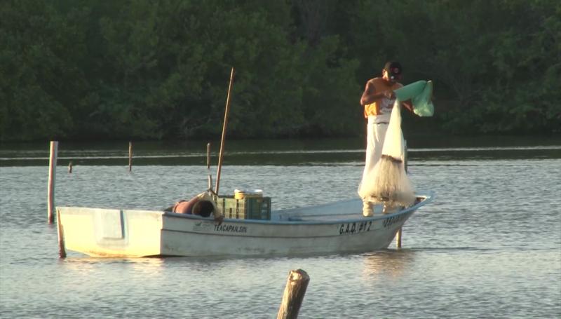 Bajas las capturas de camarón en Escuinapa