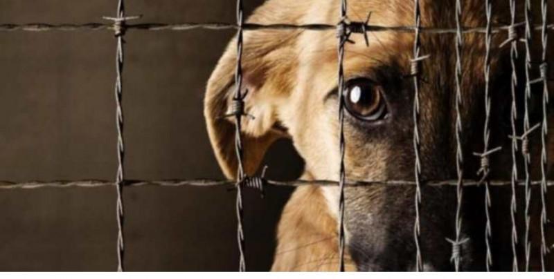 Proponen 5 años de cárcel por maltrato animal y también sancionar la difusión de sus videos