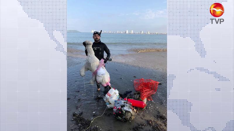 Emerge oso polar de las aguas cálidas de Mazatlán