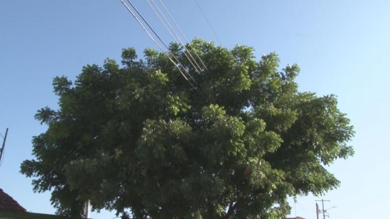 Árbol alcanza los cables de alta tensión