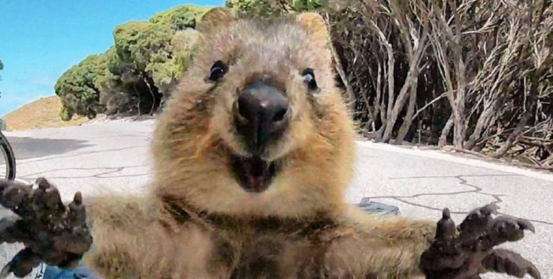 Estudio inglés asegura que ver fotos o videos de animales tiernos reduce significativamente el estrés