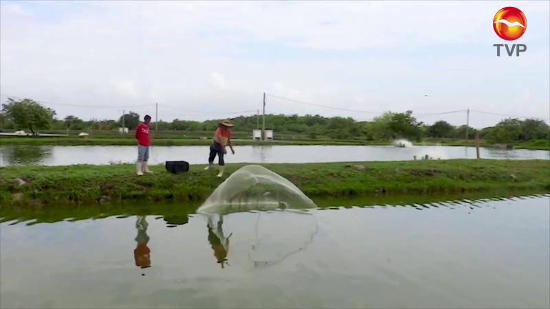 Dará la CONAPESCA apoyos, pero a la acuacultura