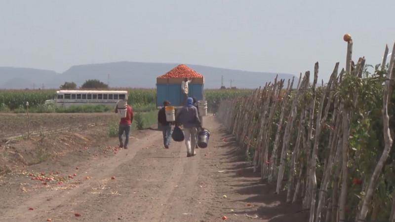50 mil familiar jornaleras llega a Sinaloa, existen protocolos de atención a la niñez