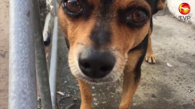 Inquieta aumento de hacinamiento de mascotas en Mazatlán