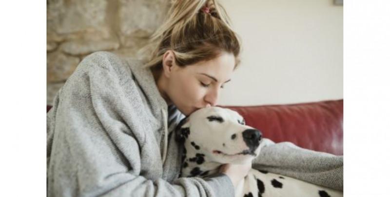 Mujer de NL buscó ampararse para adoptar a su perro como su hijo