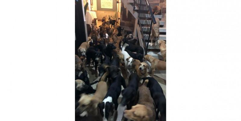 """Joven recogió y cuidó a 300 perros callejeros para que no sufrieran el azote del huracán """"Delta"""""""