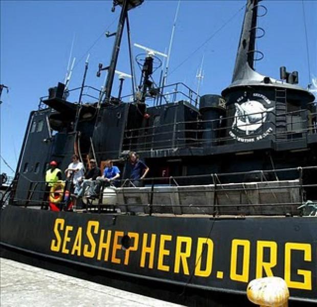 Barco de Sea Shepherd regresa a labores para salvar vaquita marina en México