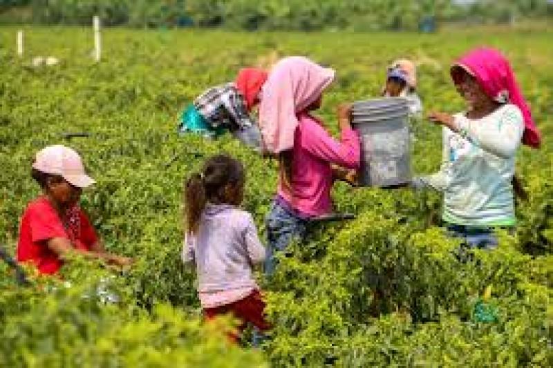Exhortan a cumplir con el derecho de aprender de niñas y niños jornaleros migrantes