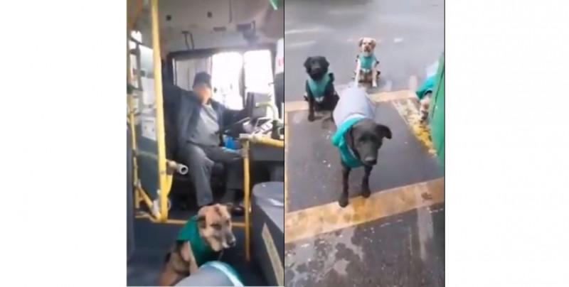 """Video: esta central camionera ha """"contratado"""" perritos callejeros"""