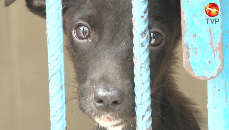 Aumentan casos de animales en situación de calle, abandono y maltrato en Mazatlán