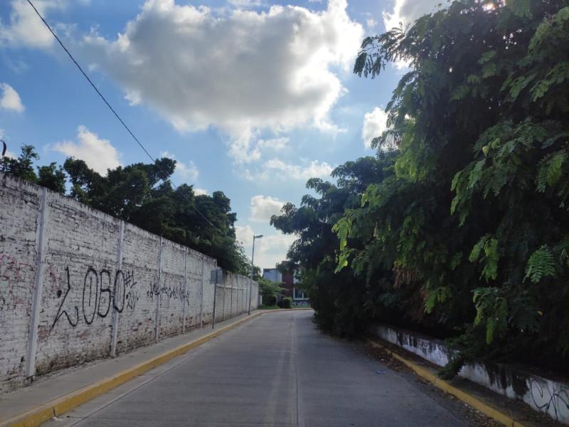 Árboles crecidos y mangle, invaden Avenida Fresnos en el Fraccionamiento Jacarandas