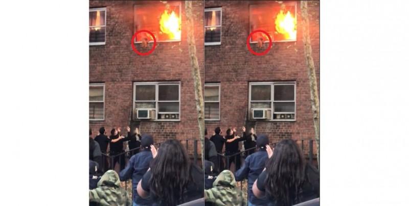 Mira como este valiente gato salta de piso en llamas para salvar su vida