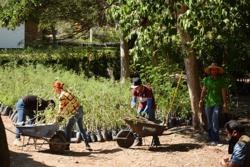 Recibe Parque Sinaloa más de 2 mil arboles