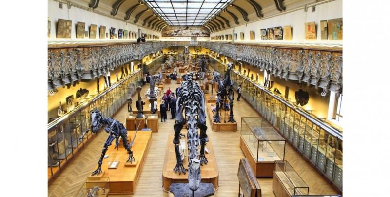 Por 7,200 pesos puedes darle nombre al hueso de un mamut que será restaurado