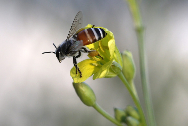 Miel sin abejas