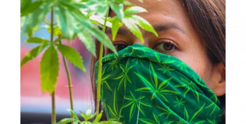 Este miércoles los senadores discutirán la legalización de la marihuana con fines recreativos
