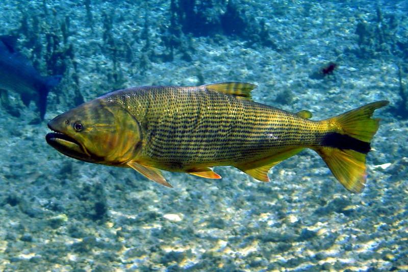 Les propone buscar otras alternativas de pesca