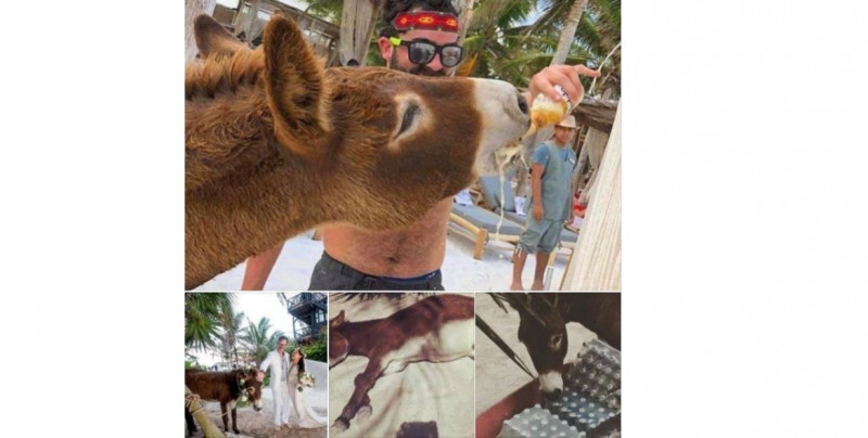 Denuncian que hotel en Quintana Roo permite a huéspedes emborrachar a burro como atractivo turístico
