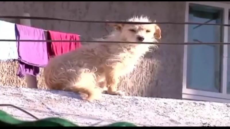 Acuerdan seguimiento a casos de maltrato animal en Cajeme
