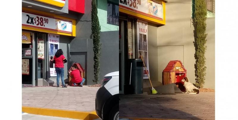 Empleados de Oxxo adoptan a perro callejero y le construyen su casa afuera del negocio