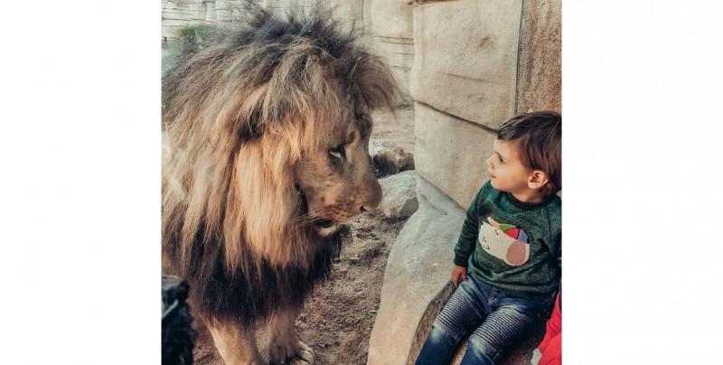 Cuatro leones del Zoológico de Barcelona dan positivo a Covid-19