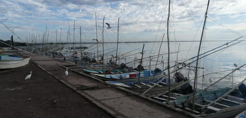 Actividad pesquera en el norte de sinaloa a la baja