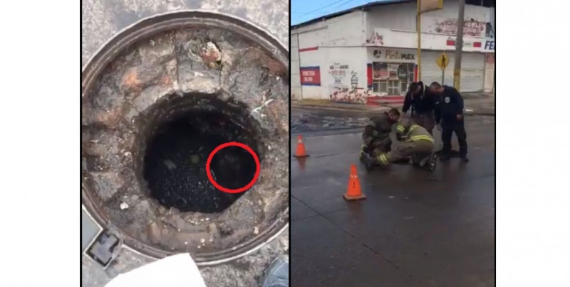 Video: bomberos rescatan a perro que cayó en alcantarilla destapada