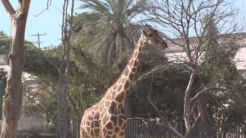 3 mil visitantes tuvo el Zoológico de Culiacán en el primer fin de semana del año