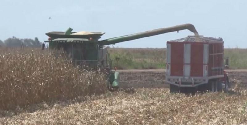 Productores Agrícolas en el olvido: Marte vega