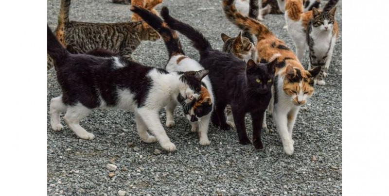 Australia exterminará a millones de gatos por esta razón