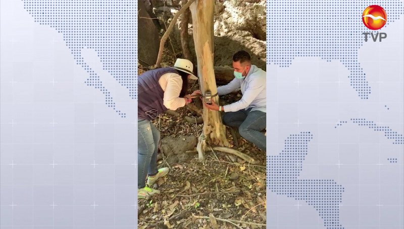 Apoya SEDESU certificación de 6 mil hectáreas como Área Destinada Voluntariamente a la Conservación
