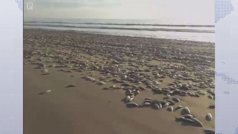 PROFEPA descarta que mortandad de peces en playa Bella Vista sea por contaminación