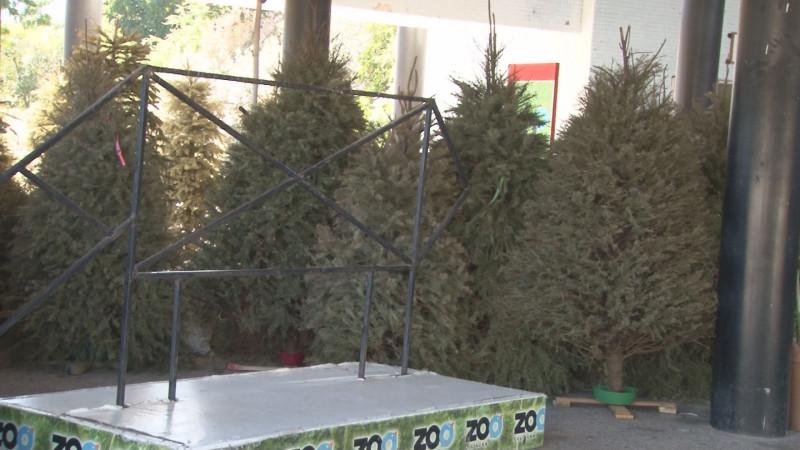 Zoológico de Culiacán sigue recibiendo pinitos de navidad