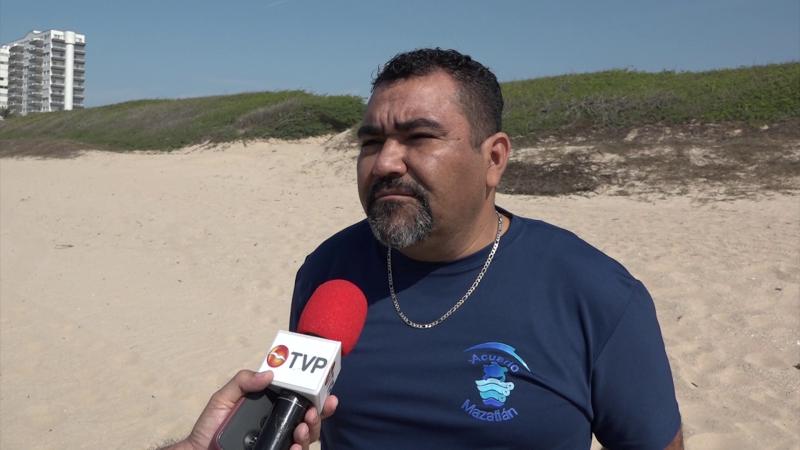 Temporada regular de anidación de tortugas en Mazatlán