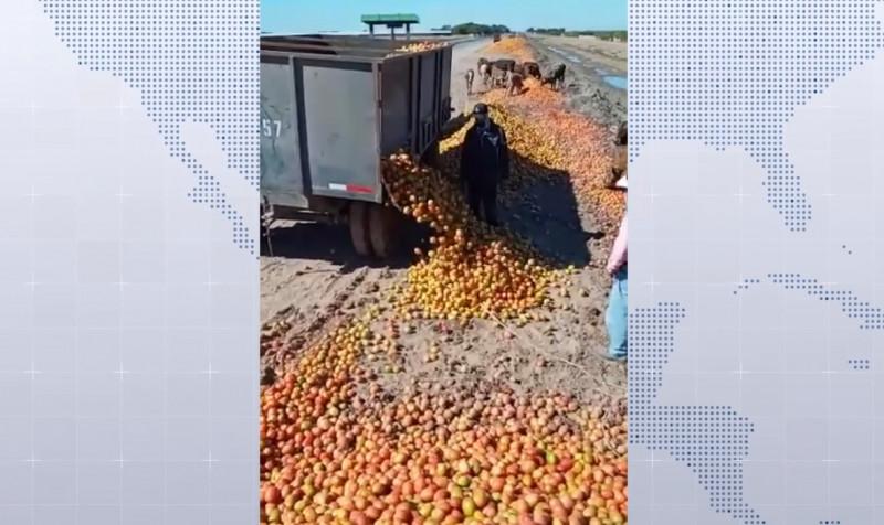 Productores hortícolas optan por tirar sus cosechas