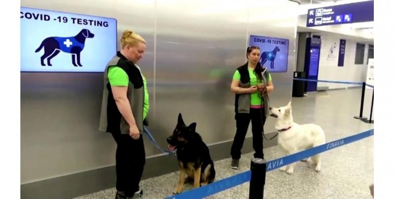 Estos perros tienen 94% de precisión al detectar Covid-19 en la saliva humana