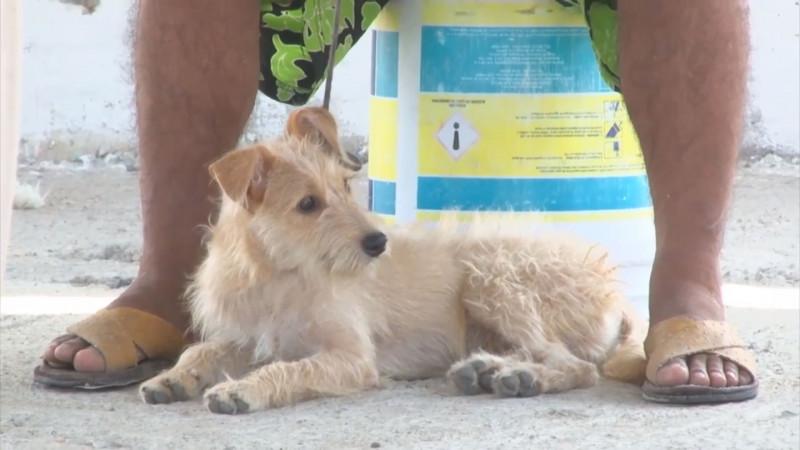 En espera de publicación de la Ley de Protección Animal en Sinaloa