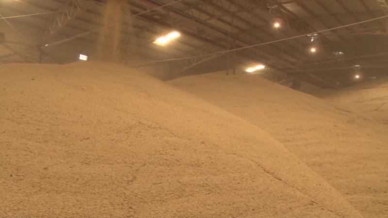 El nuevo gobierno no contemplaba programas de comercialización de granos