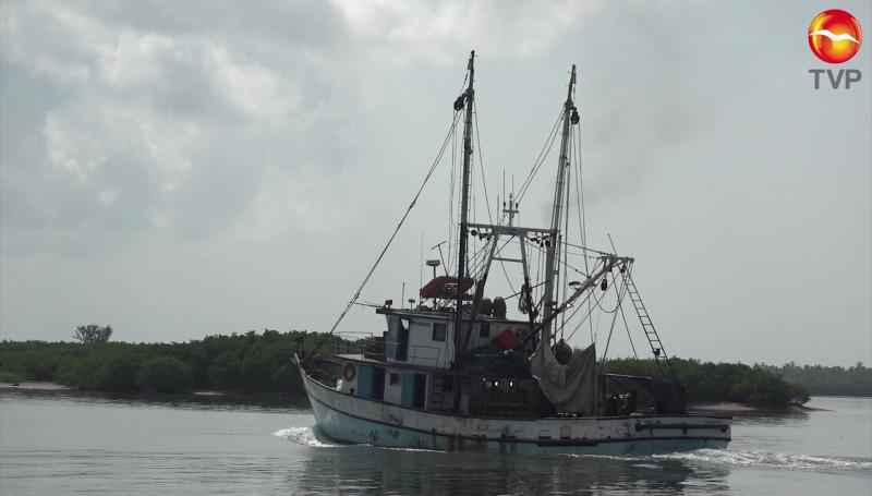 Reduce la producción de camarón en lo que va de la temporada: CONAPESCA