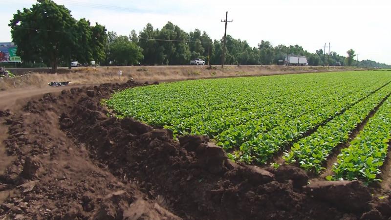 Piden a productores guardar sus cosechas