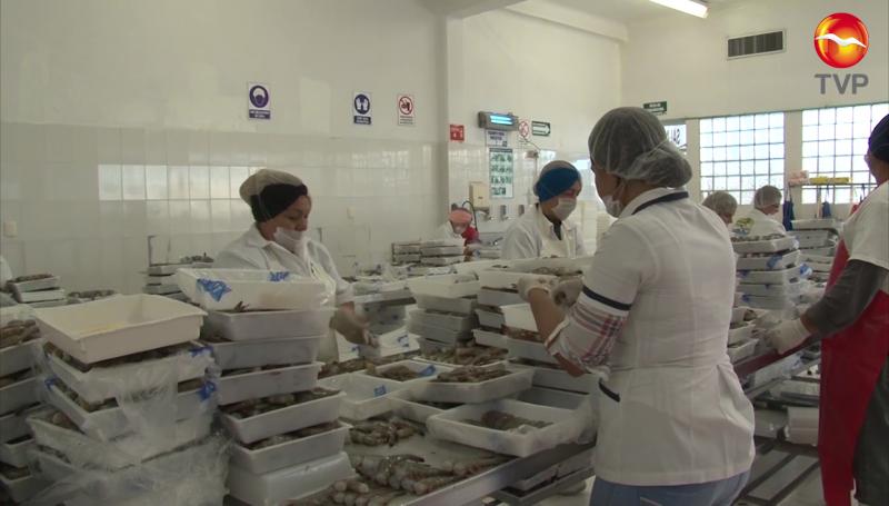 Será el precio el que beneficie a los productores sinaloenses en exportaciones