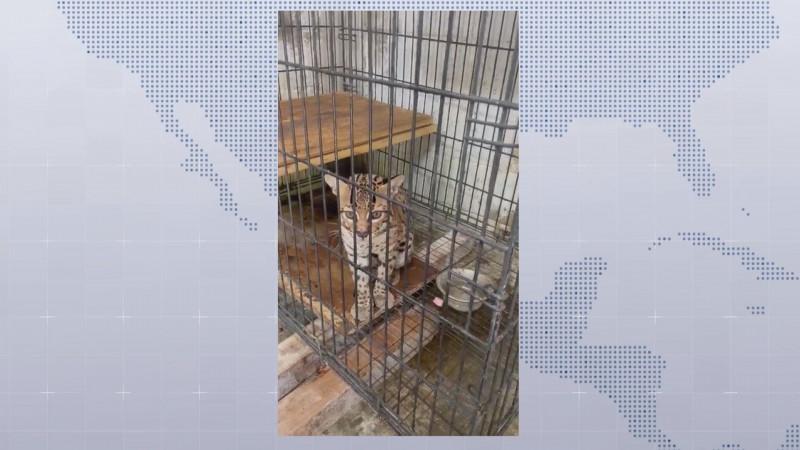 Llama la AZCARM a las autoridades ambientales proteger la vida animal