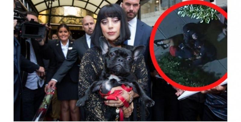 Hombre roba los dos bulldogs de Lady Gaga tras dispararle a su cuidador: ofrecen 500 mil dólares de recompensa